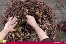 video hniezda