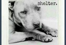 Save Pitbulls!!!