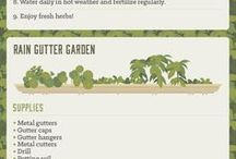 vegetable and herb garden