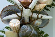 simpukat, merisiilit ja -tähdet