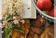 Fall / by Rhonda Nelson