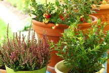 Gardening  / by Serena Curtis