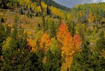 Colorado Fall Foliage - Colorado Info / Every leaf speaks bliss to me,  Fluttering from the Autumn Tree... - Emily Brontë  #FallFoliage #ColoradoInfo