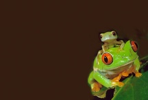 I love FROGS / by Julie Gray