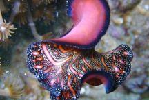 amazing dives