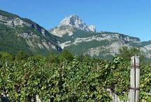 vineyards of the Alps