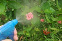 Astuces jardin