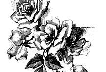 biało czarne kwiaty