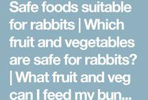 Bunny info
