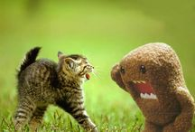 Animal Antics / by Janet Ginn