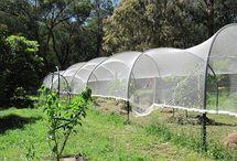 orchard bird netting