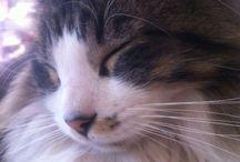 Valentino / Gatito peludo y dormilón