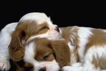 PUPPIES THAT ARE AMAZING AND ADORABLE