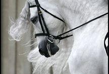 Horses / by Becky Tilson