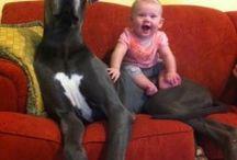 smart dog live long time