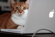 Geeky Kitties Make Apps! / www.appswithcats.com / by The Daily Mew