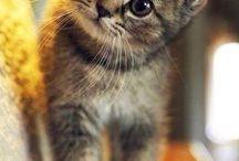 tatlı kedicikler