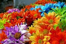 frasi fiori