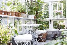 orchidea házak