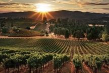 Wijngaarden onze passie