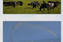 Biobugs International / Biobugs International- Dairy Treatment in Gore, Dairy Pond Cleaner Gore