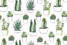colecção: cactus
