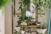 Garden Tips & Ideas
