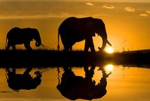 Africa.... Home <3