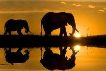 Animals! / by Kat Hambor