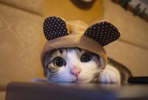 Kočky/Cats