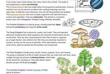 5 nature kingdoms