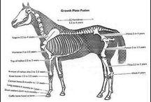 Horses (Educational)