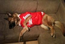 Reyia, my dog <3
