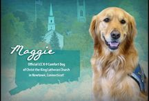 LCC Comfort Dogs by state, vest or card / Lutheran Church Charities Comfort Dogs