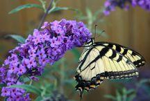 Beautiful Butterflies / by Nicole