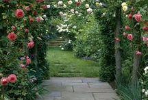 Rose Garden / Rose Garden