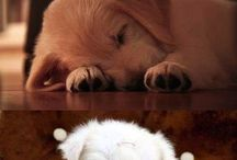 cutest animals ♥