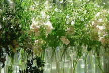 Cool Plants to Grow