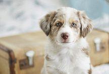 puppies / by Alexandra Macedo
