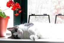My Cats / by wtfCeliac