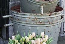 Tulpen / Tulpen zijn er in velen kleuren . Er zijn heel veel mogelijk heden om de tulp te decoreren. Www.rozemarijnleiden.nl