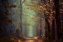 The Sacred Forest