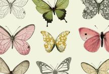 Sketchbook inspiration for Butterflies
