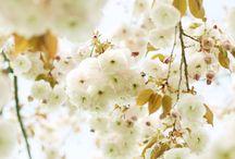 Flower / Flores