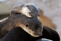 I love Otters!!!