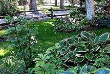 have og planter