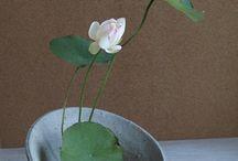 Ikebana / Japanese flowerart