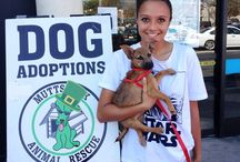 Muttshack Animal Rescue / Animal Shelter Rescue - Muttshack Adoptions - Petco Burbank/Glendale