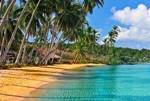 Morza tropikalne