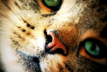 Kittens In Mittens / Everything on little wittle kitties